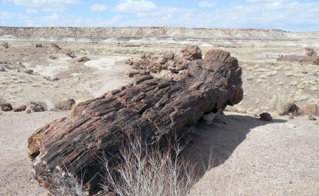 Madera Petrificada cerca del Monte Ararat en Turquia